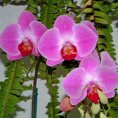 Madera flower  .jpg