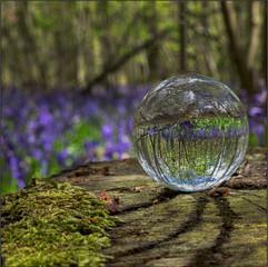 18 Great Wood Blickling Bluebells.jpg