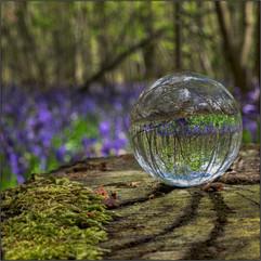 Great Wood Blickling Bluebells