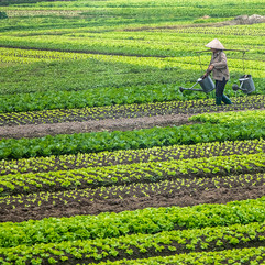 Irrigation Vietnam style