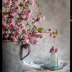 Cherry blossom and Poets