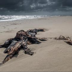 Tree stump on Winterton Beach