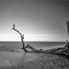 Seaward Bound