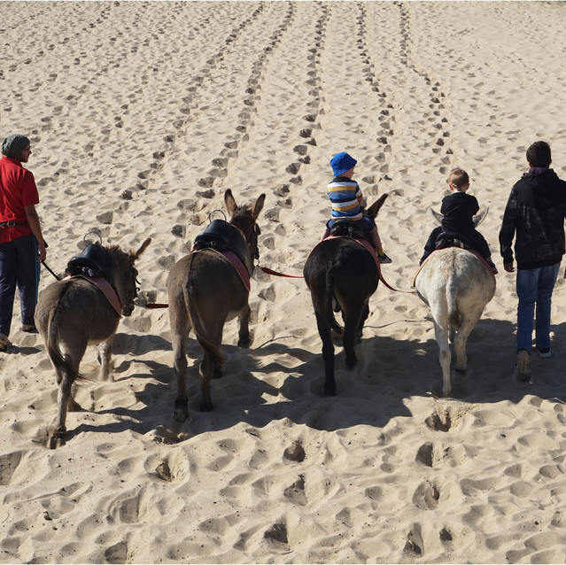 The Donkey Ride in Yarmouth
