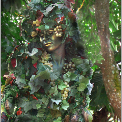 Tree lady florida