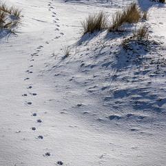 Snow on Winterton Dunes