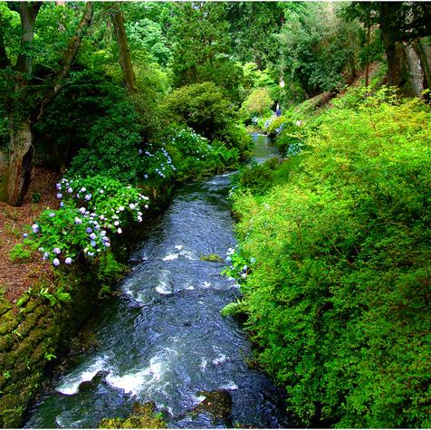Natures greens