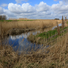 Cantley Marshes