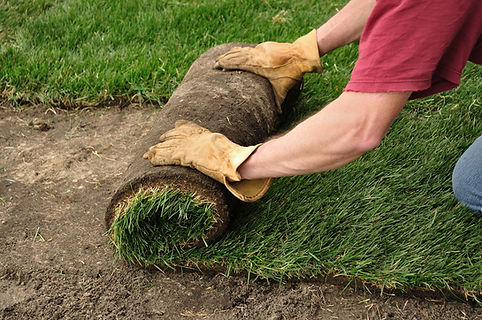 Installing Sod in Yard