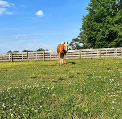 Happy enjoying her pasture