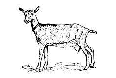 goat%2520png_edited_edited.png
