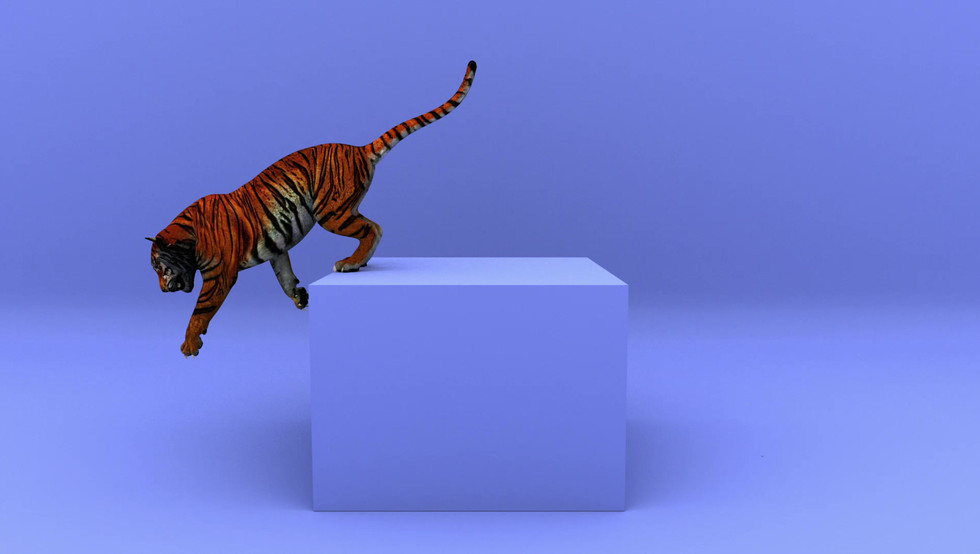 Tiger jumping on and of a box