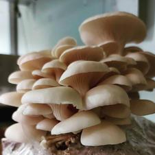 Mushroom Forestry