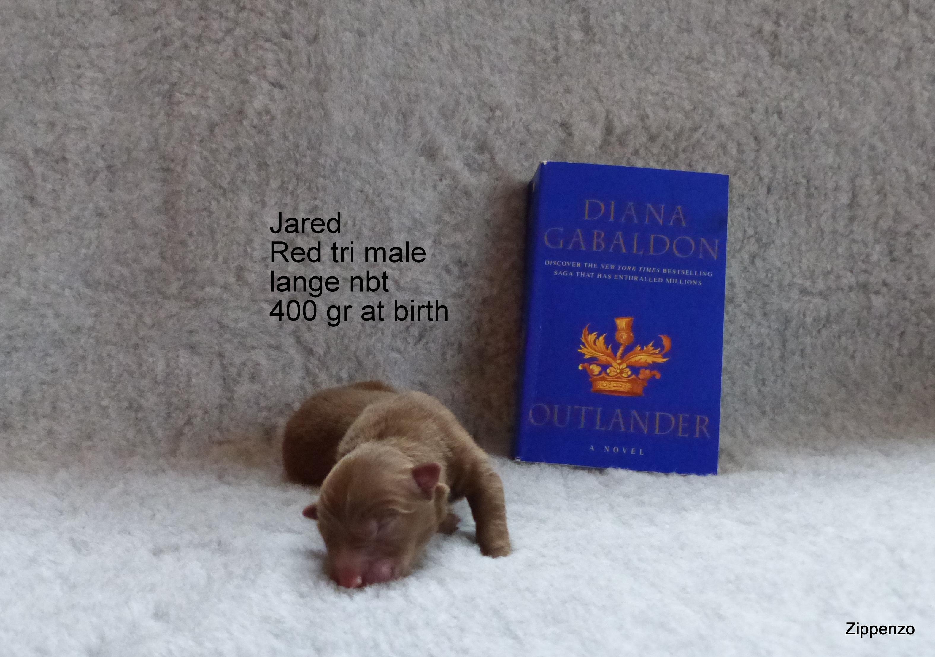 Jared 1.Tag