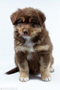 Puppy Chili week8 026.jpg