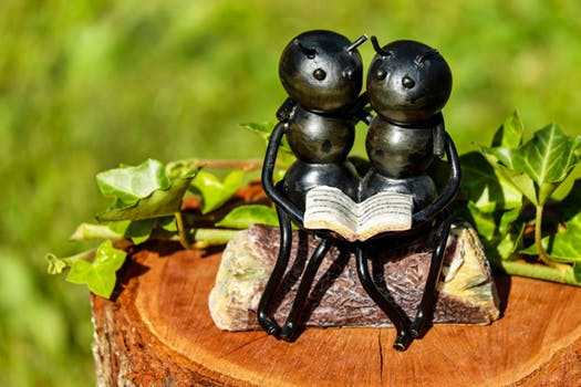 Figurine of a Couple of Ants holding a book - shallow focus photography