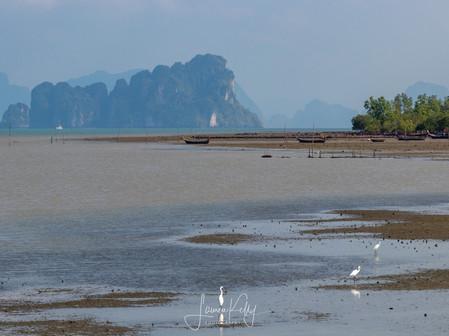 Thailand Jan 2019-278.jpg