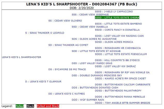 Lena's Kid's L Sharpshooter *B ADGA Pedigree