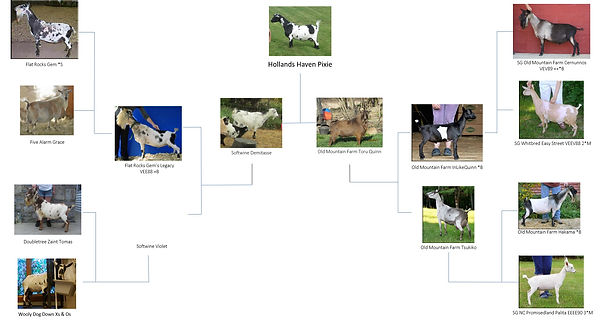 Pedigree%20in%20pictures_edited.jpg