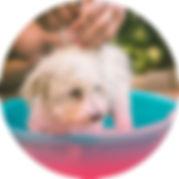 puppy-care.jpg