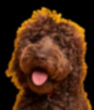 HappyTails-dog.png