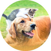 pet-care.jpg