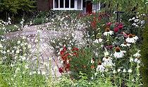 Front Garden Hampton .jpg
