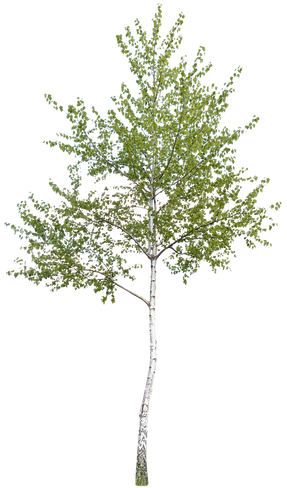 Tree-2.png