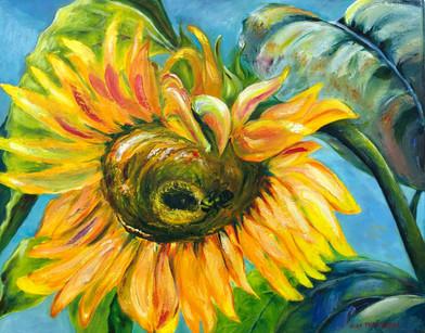 Hurricane Sunflower