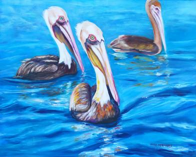 Pelicans in Key West