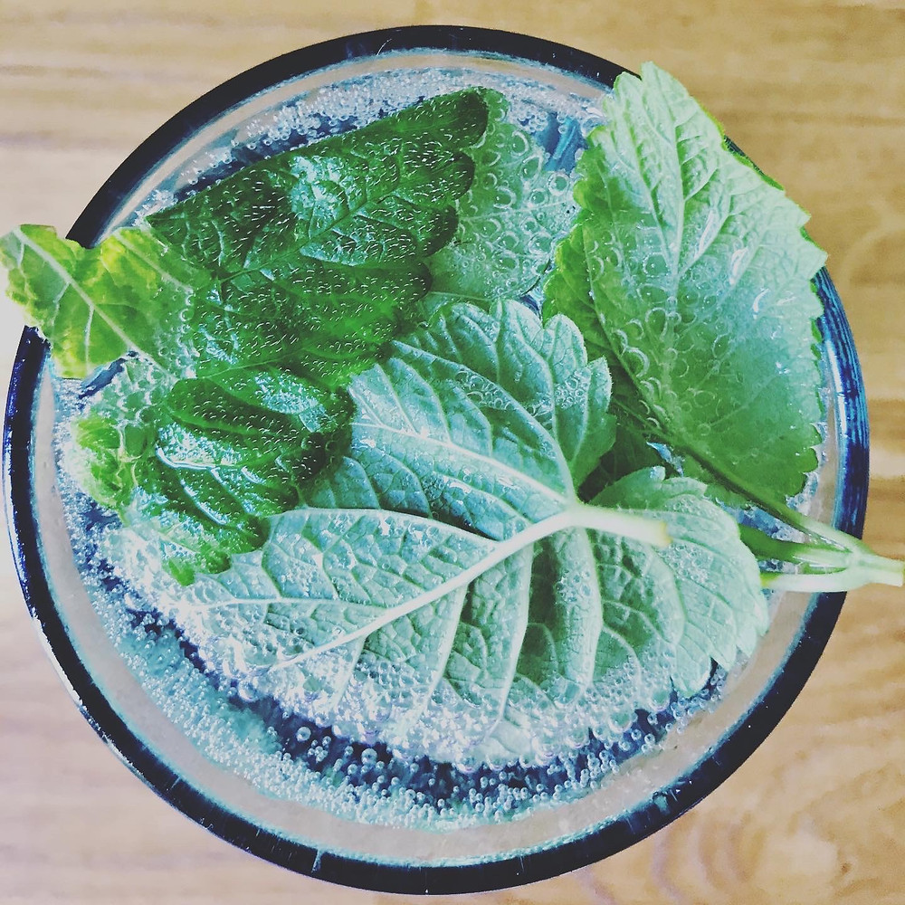 Lemon balm leaves with sparkling water in a glass