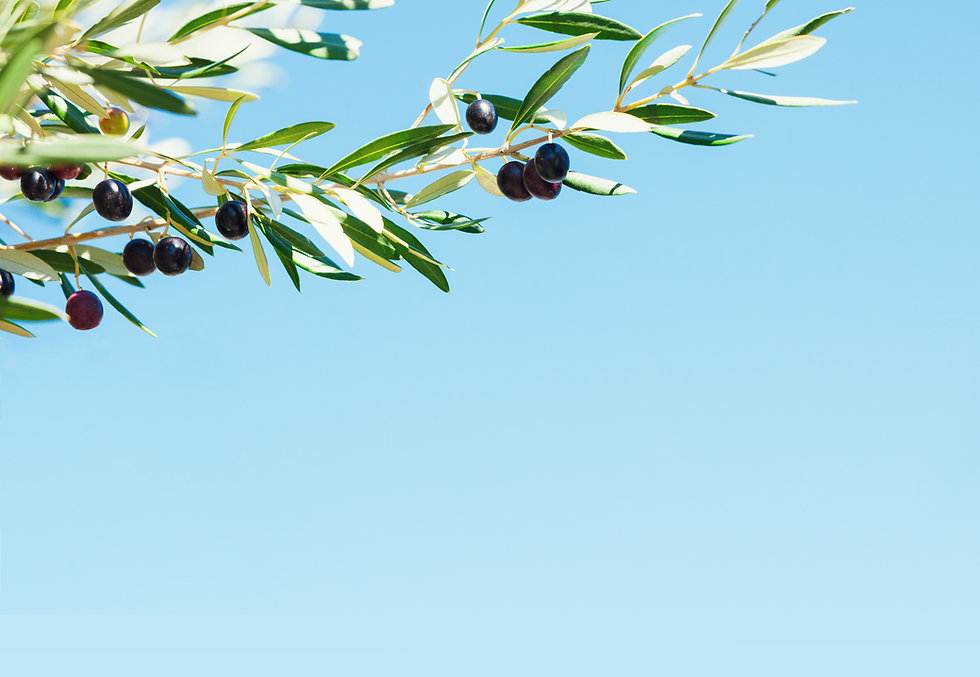 Olive tree against blue sky