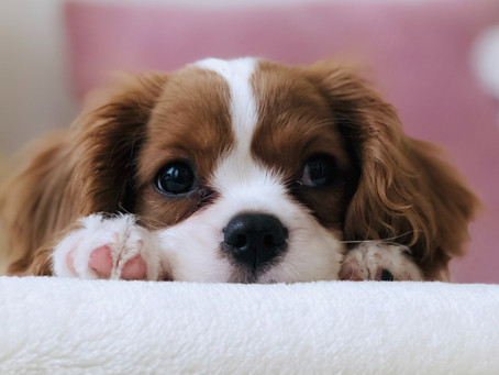 Puppy love and pet allergies
