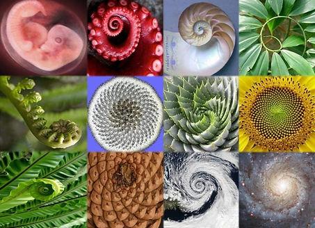 spiral-fibonacci-2.jpg