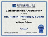 11th-Botanicals-Honorable-Mention-Light-Space-Time