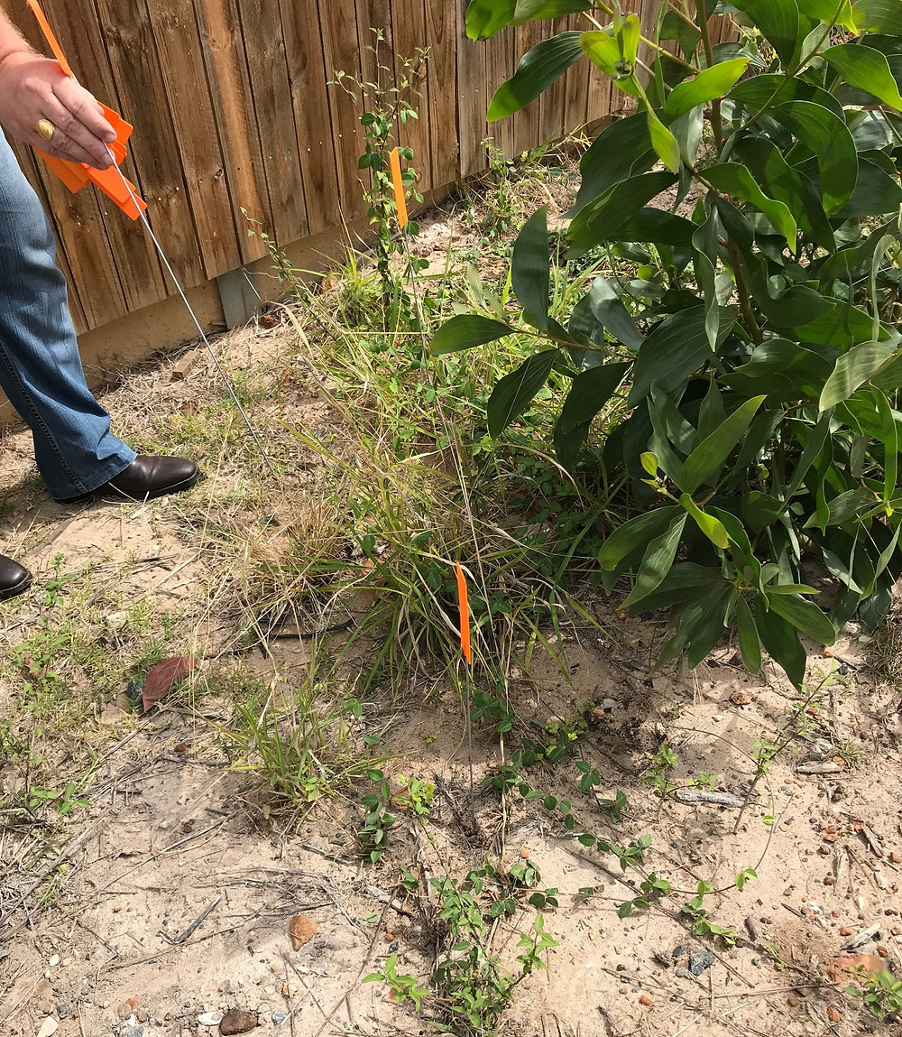 Our professional Fire Ant Inspections