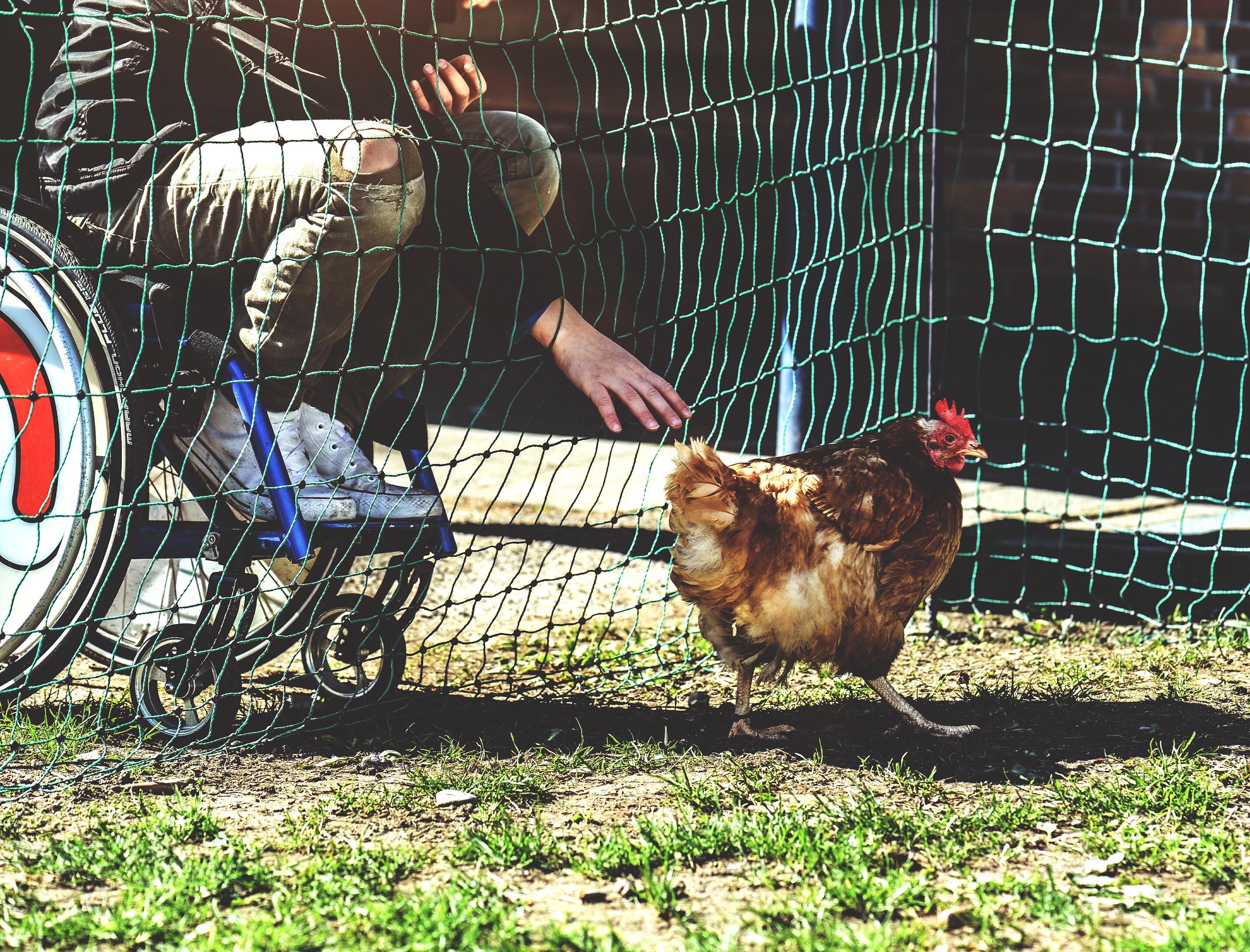 unser Huhnprojekt