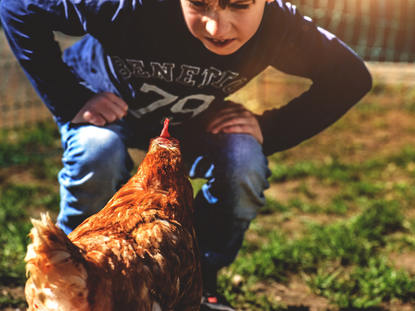Hühner an der Hans Thoma Schule