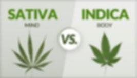 buy weed online USA.jpg