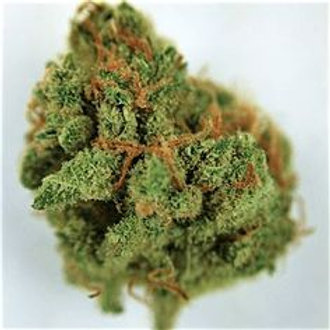 Great Bear marijuana strain