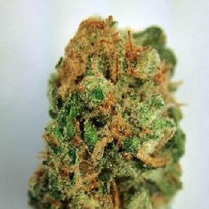 MarsOG Marijuanastrain