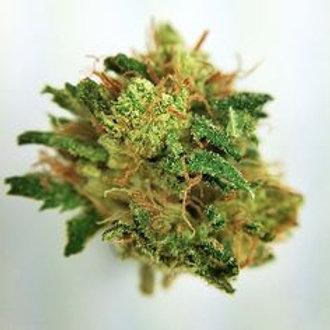 Root BeerKushmarijuana strain