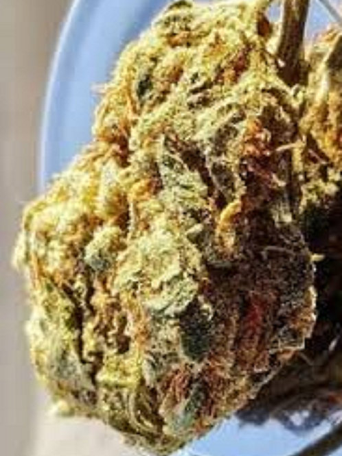 Hollands Hope weed strain