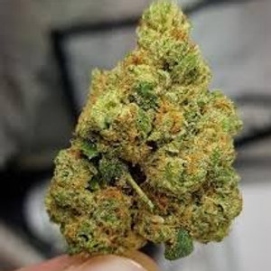 Tangalien weed