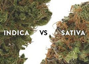 Buy weed online.jpg