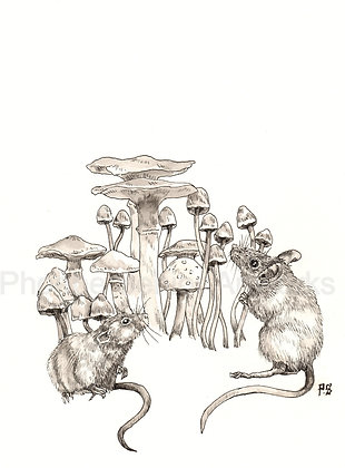 For the love of Mice and Mushrooms