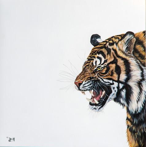 Panthera%20Tigris%20Growling_edited.jpg