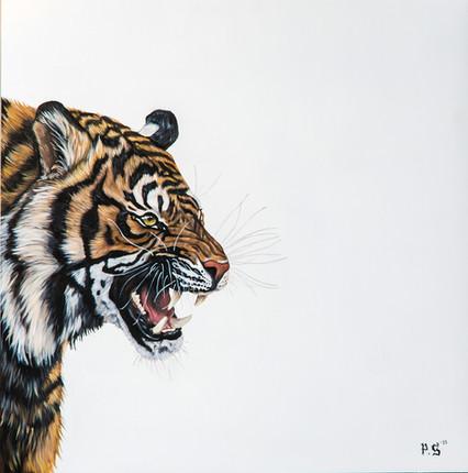 Panthera Tigris Growling