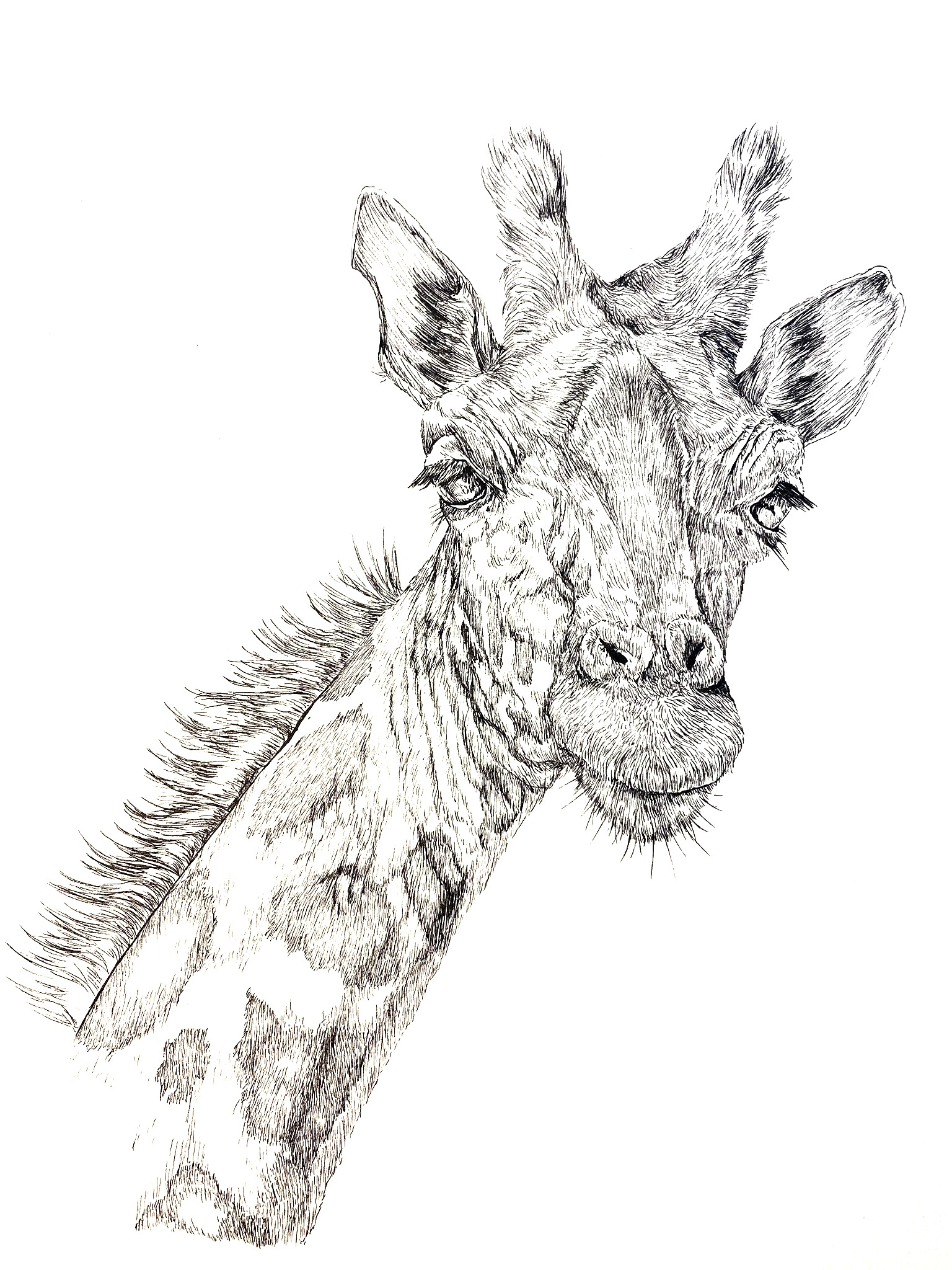 Giraffe Commission
