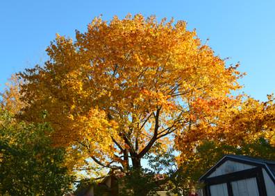 Autumn at Eden Village